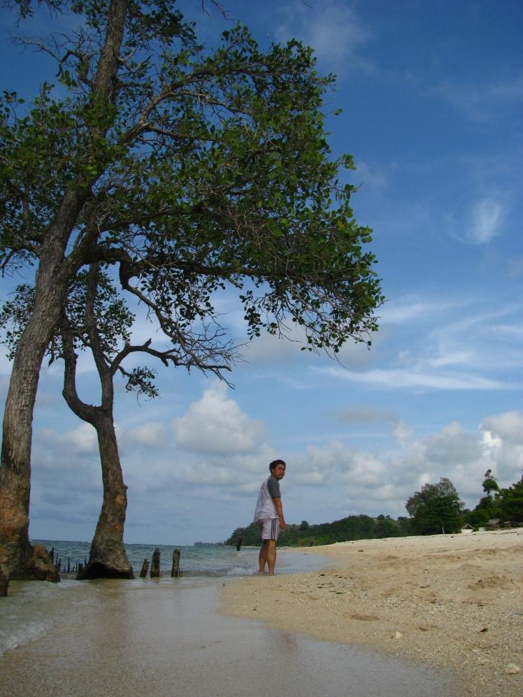 Batang Bakau, jadi hiasan pantai Pasir Putih