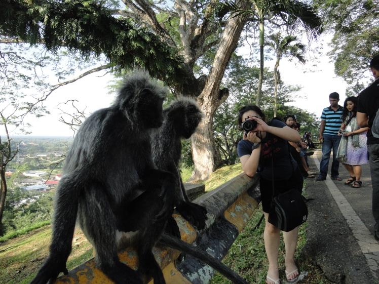 Monyetnya Narsis, suka banget difoto dan sadar kamera