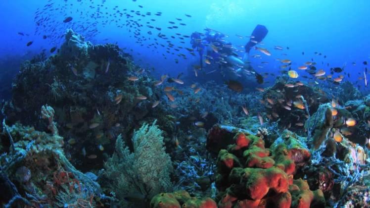 Sabang marine 1